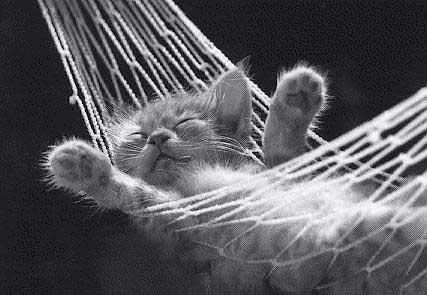 Lazy Sunday
